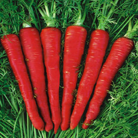 Carrot Red Long Vegetable Seeds